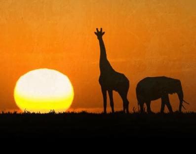 Paf lottar ut resor till Sydafrika